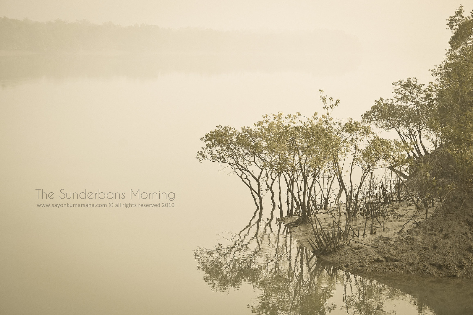 The Sunderbans Morning